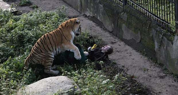 Photo of Un tigre ataca a su cuidadora en un zoo de Rusia